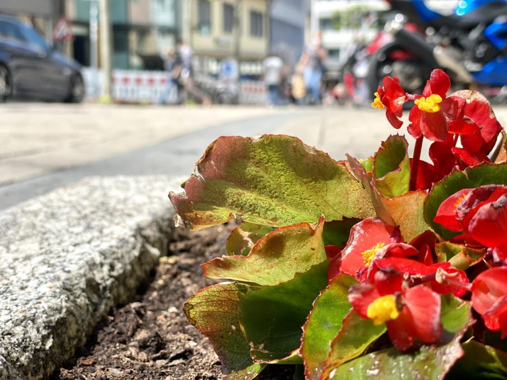 Haushaltsaufloesung Heilbronn