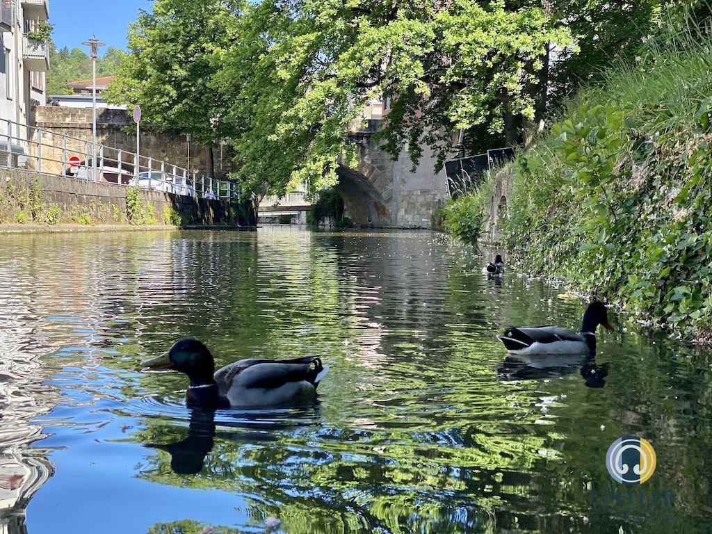 Entrümpeln Esslingen am Neckar