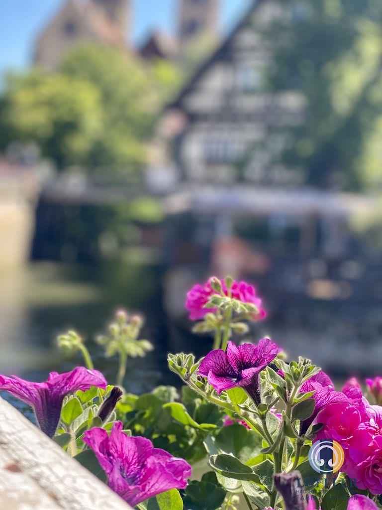 Entrümpelungsunternehmen Esslingen am Neckar Wäldenbron